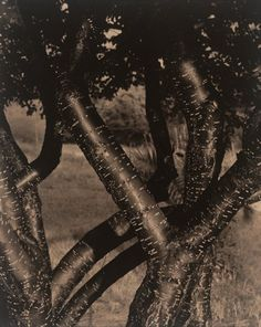 Alfred Stieglitz, Dancing Trees, 1921.  Art Experience NYC  www.artexperiencenyc.com/social_login/?utm_source=pinterest_medium=pins_content=pinterest_pins_campaign=pinterest_initial