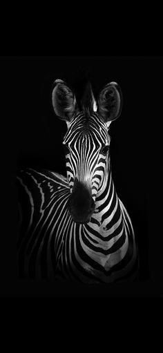 Wildphotoart 'The Zebra' Canvas Art - 30 x 2 x 47 - Black and white - Art Zebra Painting, Zebra Art, Painting On Black Canvas, Zebra Drawing, Zebra Decor, Spray Painting, Animals Black And White, Black And White Canvas, Black Paper