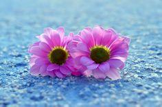 Soft colour rhapsody by Matthias Photography on 500px