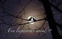 Liefdevolle avond