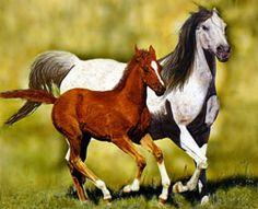 Google Image Result for http://www.horsecrazygirls.com/images/wild-mustang-horse-14-21267470.jpg