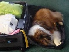 You're not going without me. Ours goes everywhere with us. He thinks he's a person. ♥