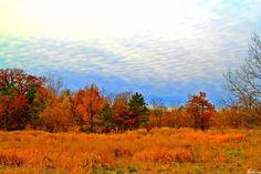 Autumn Landscape, Fairfield Iowa