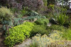 Peter Fudge garden