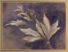 Study of Young Leaves of Plane, in Light and Shade  John Ruskin