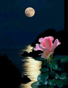 I love the way pink flowers seem to glow in moonlight Moon Photos, Moon Pictures, Nature Pictures, Pretty Pictures, Beautiful Moon, Beautiful Flowers, Good Night Beautiful, Shoot The Moon, Good Night Moon