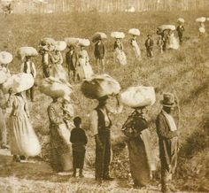 Humans in bondage returning from the cotton fields in South Carolina (1800s)