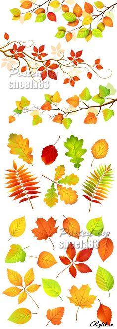 Осенние фоны с листьями - клен, рябина, тополь, калина, дуб