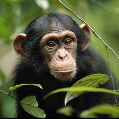 hold a baby chimpansee  #bucketlist #chimpansee