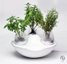 """Grow and Share Produce With Pod Indoor Garden"" -- Very clever device; click through for more photos."
