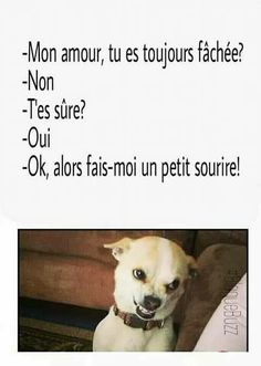 Suis presque plus fâchée ., Encore un peu . Funny Animal Memes, Funny Animals, Funny Jokes, Hilarious, Funny Images, Funny Pictures, Some Jokes, Funny Picture Jokes, Prank Videos