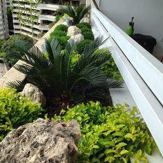 #jardinera #minimalista #bajo mantenimiento #tropical #color #forma #circulo #vida #naturaleza  #oxigeno #relax #decoracion #movimiento #rocas #palmas #sagu #garbancillos #golden #bambucillos🌴🌿🍃🍃 Primer mantenimiento después de 3 meses de sembrada