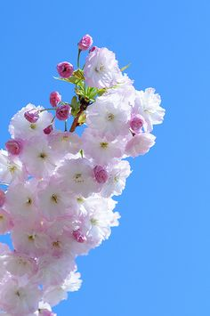 Very beautiful flowers - fondant inspiration Very Beautiful Flowers, Exotic Flowers, Amazing Flowers, Pretty Flowers, Beautiful Beautiful, Instead Of Flowers, Types Of Flowers, Sakura Cherry Blossom, Cherry Blossoms