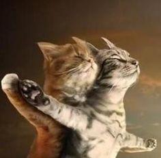 Titanic kitties :)