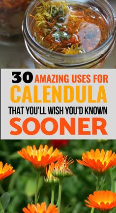 Calendula: 30 Amazing Benefits and Uses Calendula is a miracle herb with some amazing uses. Learn 30 different uses for calendula- from acne to curing bacterial infections! Cold Home Remedies, Natural Health Remedies, Herbal Remedies, Natural Sleep Remedies, Holistic Remedies, Healing Herbs, Natural Healing, Holistic Healing, Healing Oils