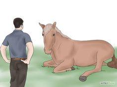 Teach Your Horse to Lie Down Step 8.jpg