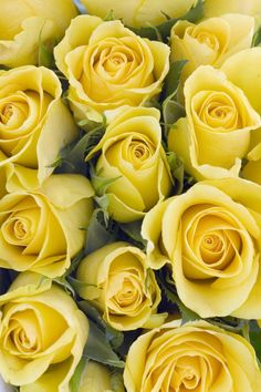 Yellow Roses - imply Infidelty