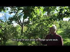 Les Fermes Miracle, un verger commercial en permaculture de 5 acres dans le sud du Québec - YouTube