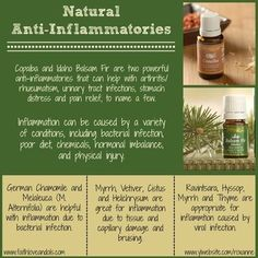 Anti-inflammatory Relief with Young Living - German Chamomile, Copaiba, Idaho Balsam Fir by Sugarbean Copaiba Essential Oil, Essential Oils 101, Essential Oil Blends, Young Living Oils, Young Living Essential Oils, Healing Oils, Oil Benefits, Natural Oils, Natural Healing