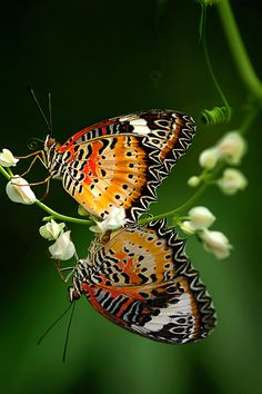 beautiful butterflies from 'The living things around us' photograpy