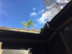 Trees growing in the gutters