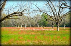 """http://www.followthatdreamphotography.com  """"Tree field"""" Picture All art comes with a matting of your choice of black or white and a protective cover and signed.If no color is chosen for the matting one will chosen for you.Email me for different sizes. 8x10 (fits an 11x14 frame)$30 + shipping(shipping rates depends on location,email for info)"""