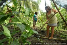 Volunteer Abroad Costa Rica Sea Turtles Conservation program from 2 to 6 weeks  https://www.abroaderview.org/programs/sea-turtle-conservation/costa-rica-environmental