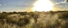 The MODISA Wildlife Project