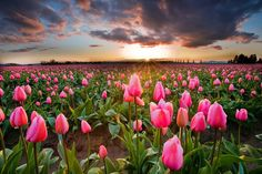 Skagit Valley, USA #travel