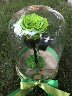 Trandafiri criogenati in clopot de sticla by Buchetino!  www.buchetino.com ☎️ 0723949413  B-dul Mircea Voda no.34