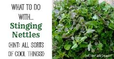 Cool Things To Do With Stinging Nettles | Health & Natural Living