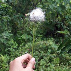 【ayuzawahime】さんのInstagramをピンしています。 《tiuplah sehingga bulu-bulunya berserakan terbawa angin, sematkanlah harapanmu, terbangkanlah dengan keyakinan bahwa semuanya akan baik-baik saja, semua kegelisahan, kekhawatiran dan ketakutan akan ikut terbawa angin,  yang hanya meninggalkan tangkai kekuatan, keberanian dan kejujuranmu saja.  semoga kau bahagia di usiamu yang tak lagi muda, di usiamu yang memaksamu bersikap dewasa dan bijaksana, amin 🎂🍻🍺🍶🍁🍃🌿😶 #applepumpkin #redvelvet…