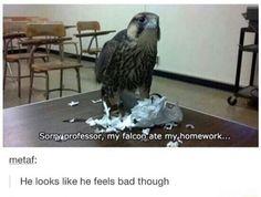 My falcon ate my homework