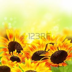Collage with sunflowers on blurred yellow background