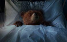 Paddington sleeping Spectacled Bear, Paddington Bear, Tatty Teddy, Brown Bear, Sleepover, Friends Forever, My Childhood, Horses, Fish Dinner