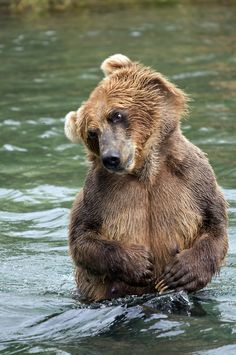 """** BEAR: """" Me knows dis be yer fishin' spot in de river, but couldz me justs snag me one trout and split? Me woulds owe yoo fer future ref."""""""