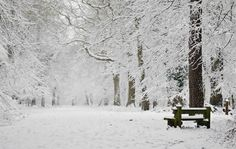 Winter fairytale #winterskin #snow #winterfun