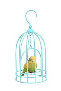 Championing great design is very important to MRP Home, it is who we are & what we do. Shop the latest trends & hottest items in home decor online. Home Decor Online, Budgies, Love To Shop, Cage, Home Furniture, Outdoor Decor, Shopping, Design, Parakeets