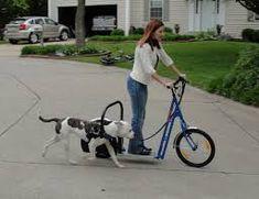 """Képtalálat a következőre: """"Scooter Powered by Your Dog"""""""