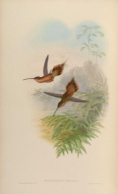 v. 1 - A monograph of the Trochilidæ, or family of humming-birds / - Biodiversity Heritage Library