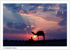 Sunset and Camels...