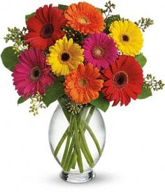 this is a good representation of the most common bright gerbera colors