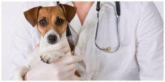 MOLTE LE MALATTIE A CUI PRESTARE ATTENZIONE E POSSIBILI CURARE CON I GIUSTI MEDICINALI, MOLTE ALTRE INVECE E' POSSIBILE PREVENIRLE CON LA CORRETTA ALIMENTAZIONE. SUL NOSTRO BLOG VI SPIEGHIAMO COME.   Malattie del cane: come proteggerlo I pericoli che incorrono i nostri amici a quattro zampe  Le malattie del cane che colpiscono il cane sono tante. Parassiti di ogni tipo, problemi legati all'invecchiamento o all'alimentazione, malattie virali sono tutte patologie che possono compromettere la…
