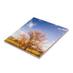 #beauty - #Woodbury in fall ceramic tile