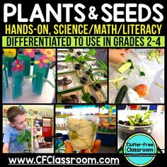 Plant Life Cycle NGSS Second Grade Science. by Clutter-Free Classroom Teaching Science, Science Activities, Life Science, Science Writing, Teaching Resources, Plant Crafts, Plant Projects, Second Grade Science, Math Literacy