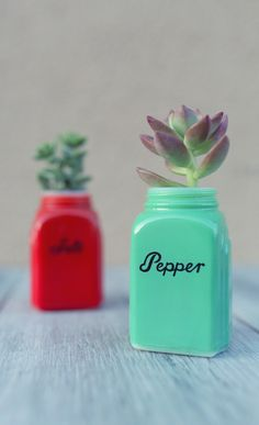 In partnership with influencer @happysolez - One of the most unique ways to plant succulents is inside of a non-traditional vintage item. Whether it be a salt and pepper shaker, or a retro teapot, this idea is absolutely adorable! #ad