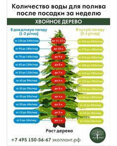 54 отметок «Нравится», 2 комментариев — EcoPlant питомник растений (@pitomnikecoplant) в Instagram: «Сколько и как часто поливать хвойные деревья?»