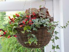 Hanging Plants - hängende Pflanzen