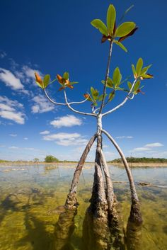 Biscayne Bay Aquatic Preserve