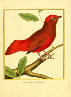 t.4 - Planches enluminées d'histoire naturelle / - Biodiversity Heritage Library